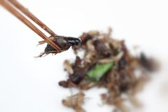 Fried insect Royalty Free Stock Photography