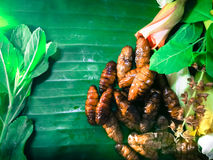 Fried insect Stock Images