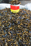 Fried insect, Myanmar. Some  fried food  insect, Myanmar Royalty Free Stock Photo