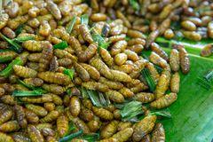 Soft Fried or pupae, silkworms royalty free stock photo