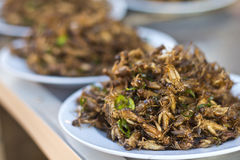 Fried insects Royalty Free Stock Photo