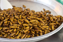 Fried insects Royalty Free Stock Photography