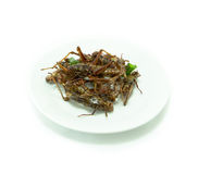 Fried insects amazing food Stock Image