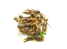 Fried insects, amazing  food Stock Images