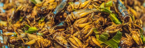 Fried insects, Bugs fried on Street food in thailand BANNER, LONG FORMAT stock photo