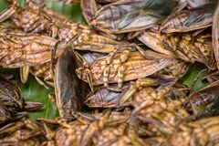 Fried insects Royalty Free Stock Image
