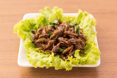 Fried insects stock photography