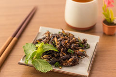 Fried insects. Cricket insect crispy with pandan after fried and add a light coating of sauce and garnish Thai pepper powder on white dish with chopsticks Royalty Free Stock Photo