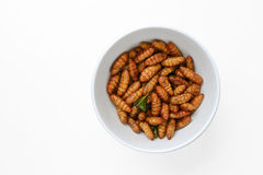 Fried insects in cup Stock Photography