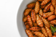 Fried insects in cup Stock Image