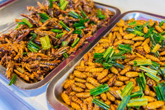 Fried insects food Royalty Free Stock Image