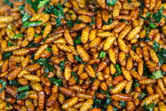Fried insects,fried ,insects. Royalty Free Stock Photo