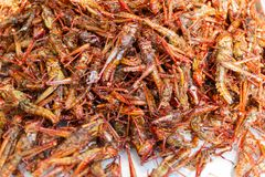 Fried insects - Grasshopper insect crispy, Thai food stock photo