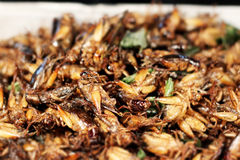 Fried insects. Fried grasshoppers, Bangkok, Thailand Tilt-shift blur Stock Photo