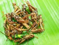 Fried insects on green leaf Stock Photos
