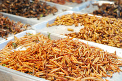 Fried insects. Many kind of deep fried insects in Thailand market Stock Images