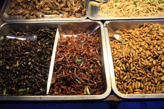 Fried insects and meal worms for eating Stock Image