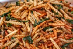 Fried insects mealworms Royalty Free Stock Photos