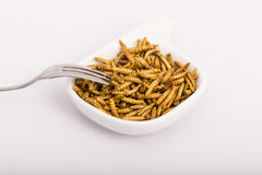 Fried insects, molitors. Fried insect, Molitors, Food of the future Royalty Free Stock Image