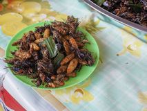 Fried insects stock images