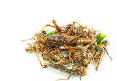 Fried insects, regional delicacies food in Thailand Stock Photography