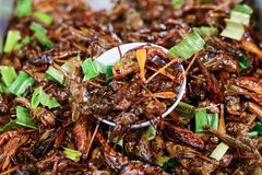 Fried insects Stock Photos