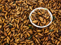 Fried insects,Thai food. stock image