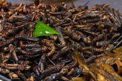 Fried insects in the tray on the counter of the Chinese market. stock photo