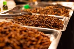 Fried Insects On Trays At gatamarknad arkivfoto