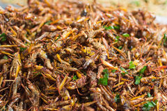 Fried insects various types Royalty Free Stock Photo