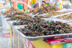 Fried insects various types Royalty Free Stock Images