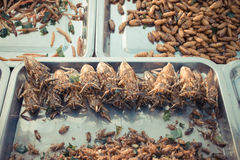 Fried insects various types Stock Photography