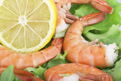 Fried Jumbo Shrimp Stock Photography