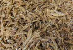 Fried little fishes Stock Images