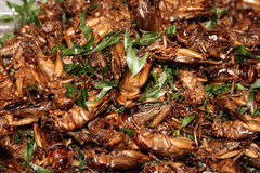 Fried  locust 2 Stock Image