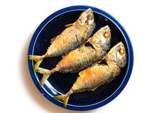Fried Mackerel. On dish ready to be served over white background Stock Image