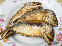 Fried mackerel fish. On dish stock image