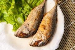 Fried Mackerel Fish Stock Afbeelding