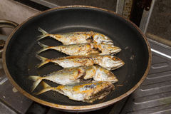 Fried mackerel on pan Stock Image