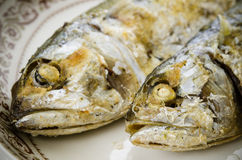 Fried Mackerel Royalty Free Stock Photography