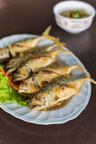 Fried mackerels in white dish. Selective Focus. Royalty Free Stock Photography