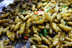 Fried Maggots imagens de stock royalty free