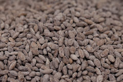 Fried melon seeds,traditional Chinese snack Royalty Free Stock Photo