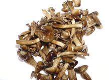 Fried mushrooms insulator mushrooms lot Royalty Free Stock Images