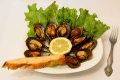 Fried mussels giants Stock Photo