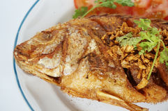 Fried Nile tilapia fish Royalty Free Stock Image