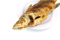 Fried nile tilapia fish Stock Photography