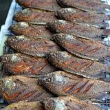 Fried nile tilapia or oreochromis nilotica fish Stock Photography