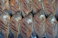 Fried nile tilapia or oreochromis nilotica fish Royalty Free Stock Photography