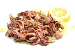 Fried octopus in isolation Royalty Free Stock Image